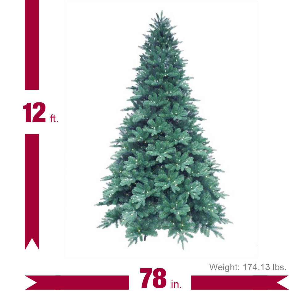 Image of tree with dimensions.