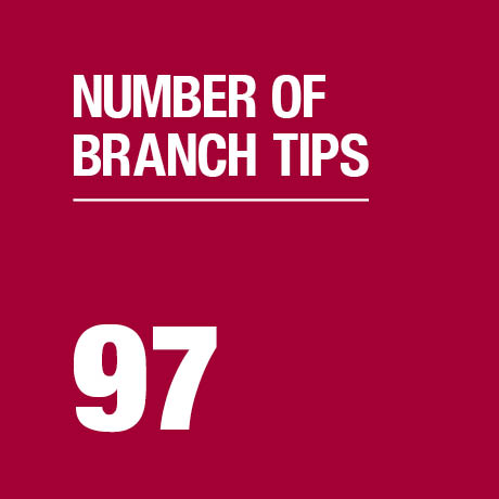 Number of branch tips on tree.