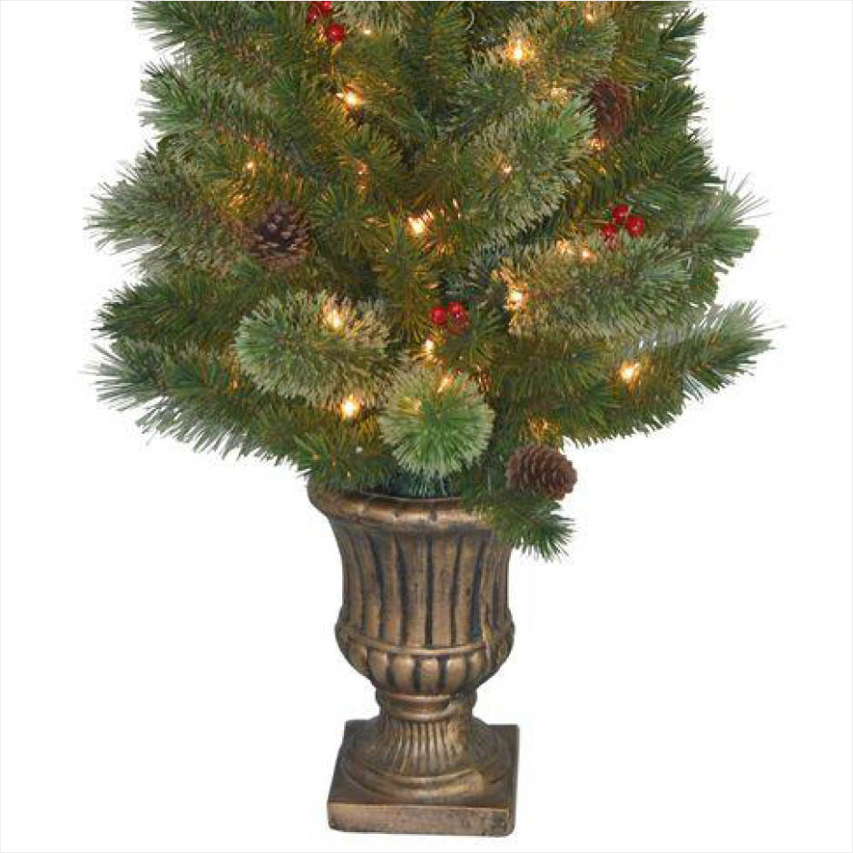 Top 28 Live Potted Christmas Trees Home Depot Home